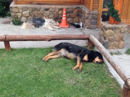 Gisela Feuz: Montagshunde Caf� Kairo Lorraine Bern